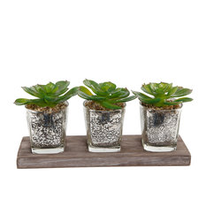 Glass Mercury Succulent On Wood Tray, Set Of 3