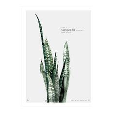 """Botanic Urban Plate 2, Sansevieria"" Print, Large, 50 x 70 cm"