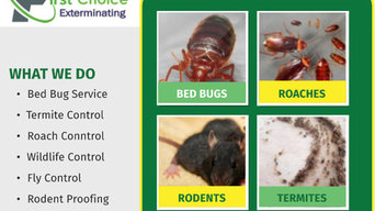 Bed Bug Extermination Service