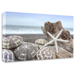 """Tangletown Fine Art - """"Crescent Beach Shells 5"""" by Alan Blaustein, Print On Canvas, 36""""x24"""" - """"Crescent Beach Shells 5"""" by Alan Blaustein, Print on Canvas, 36""""x24"""", Ready to Hang""""Crescent Beach Shells 5"""" gallery wrap canvas art by Alan Blaustein, 36""""x24""""Nature art will bring tranquility to your interior design schemes. This painting printed on thick Gallery Wrap Canvas is printed using the latest Giclee techniques on museum grade canvas. Our Giclee printer uses 12 colors to create a rich color gamut giving the deep dark and subtle highlights of an original painting. Our gallery wrap canvases are printed on 100% thick cotton canvas. 100% thick cotton canvas will loosen naturally when the wood expands and it will shrink like fresh jeans just out of the drier when the wood shrinks. The canvas is then stretched over kiln dried  finger jointed pine. With finger jointing technology the wood stays straight and strong. Finger jointed pine frames are superior to other stretcher frames because we cut around the knots and re-join the wood using the finger jointing technology. When wood expands and contracts around knotty wood it changes it's shape. With finger jointing technology the wood stays straight and strong. The resulting piece of art will last for years of enjoyment."""
