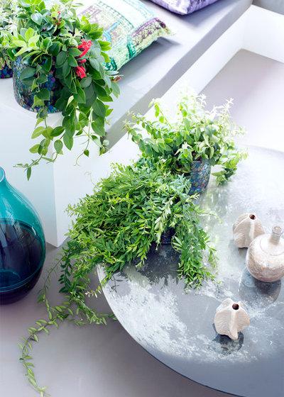 9 Zimmerpflanzen, die Sonne lieben