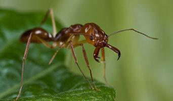 Pest Control Bundeena