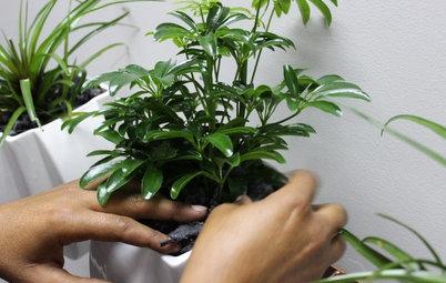 Пересадка комнатных растений: Что я делаю не так