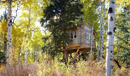 Swaying From Sleepovers to Dinner Parties in a Colorado Tree House