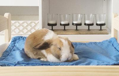 Animaux & Cie : Un lapin prend ses aises au salon