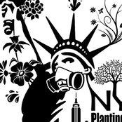 New York Plantings Garden Design's photo
