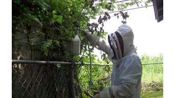 Budget Bee Removal