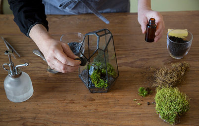 DIY Project: Make a Mini Moss Sanctuary