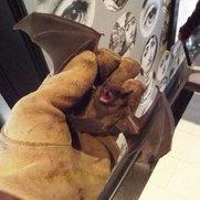 Bat Specialists Of Wisconsin's photo