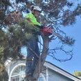 Brian's Trees's profile photo