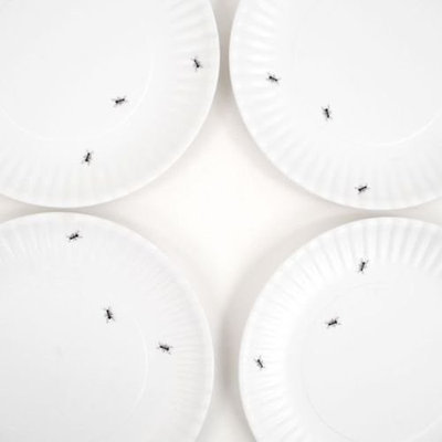 Eclectic Disposable Plates And Bowls by Amazon