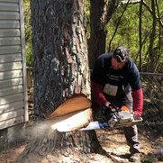 North Atlanta Tree Service's photo