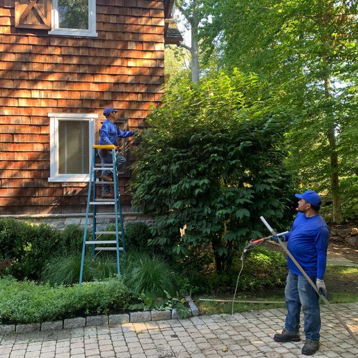 Gardeners Pole Clipping at Viburnum