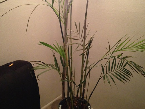 Dying Bamboo,Small Studio Apartments Decor