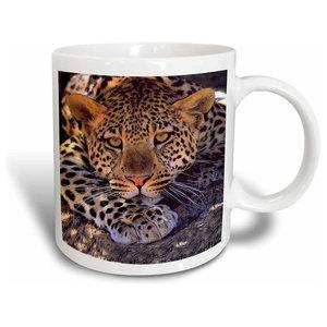 Shikara Siberian Tiger Mug Traditional Mugs By 3drose L L C
