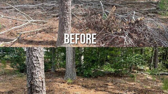 Before & After Tree Limbs and Yard Cleanups