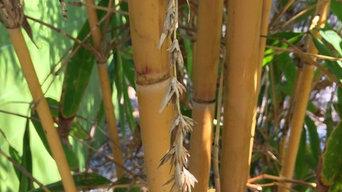 Bamboo installations