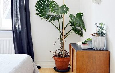 Glemmer du at vande dine planter? Her er 7 slags, der overlever