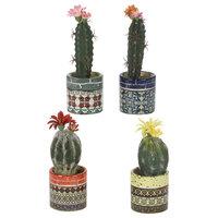 Assorted Cactus, Colorful Ceramic Cups, Set of 4