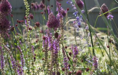 10 Stauden und Sommerblumen, so leicht wie ein Lufthauch