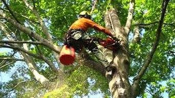 Detroit Tree Service