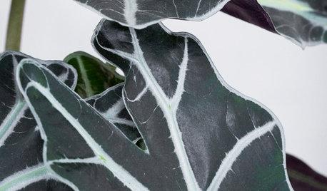 Växttrender 2019: Hållbara buketter och annorlunda gröna plantor