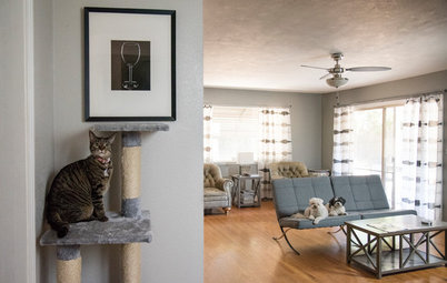 Pet's Place: This Home Is Tailor-Made for Dogs and Cats