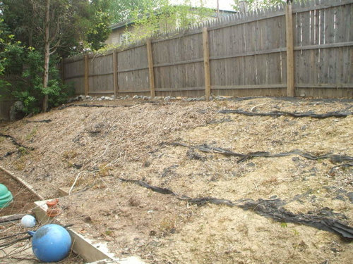 how to grow grass on a slope