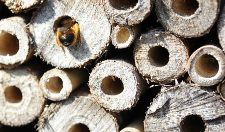 Hive Society: A Recipe for Bees in Your Own Backyard