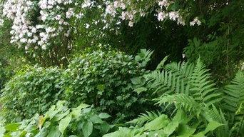 Plantering och Skötsel