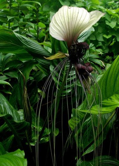 Tropicale Giardino by Knoll Landscape Design Miami