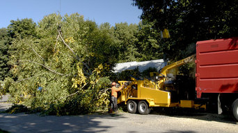 Tree Removal in Ohio