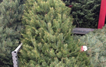 10 Ways Your Christmas Tree Can Live On After the Holidays