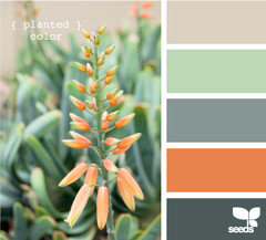 How Do You Apply A Design Seed Palette To A Room
