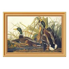 """""""Mallard Duck"""" Framed Canvas Giclee by John James Audubon, 28x20"""""""