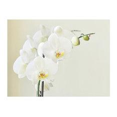 White Orchid Wallpaper Mural, 300x230 cm
