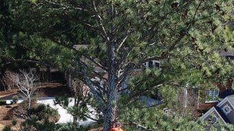 Tree Removal Project in Roswell