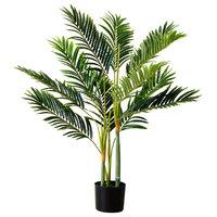 Golden Cane Palm Tree in Black Pot, 3'