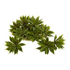 Mini Agave Succulent Plant - Set of 12