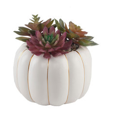 "6.5"" Faux Succulents, Ceramic Pumpkin"