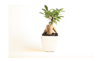 Living Plant Gifts