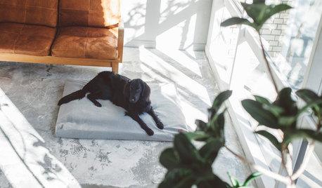 犬と暮らす幸せな家75選