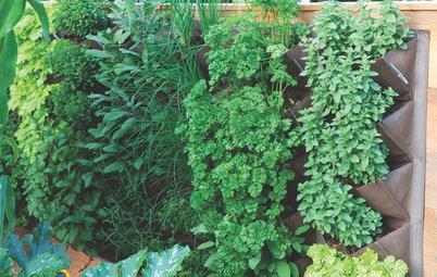 Book Review: 'Vertical Gardens' by Leigh Clapp and Hattie Klotz