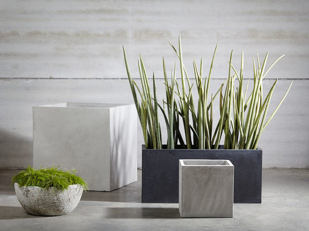 Contemporary Outdoor Pots And Planters by The Balcony Garden