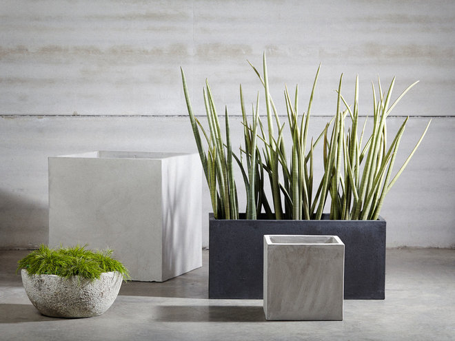 Block Out Thy Neighbour: Privacy Plants for the Modern Home 85918fb104b73de4_2913-w660-h495-b0-p0--contemporary-outdoor-pots-and-planters