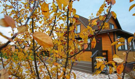 Проект недели: Пестрый сад в Рязанской области