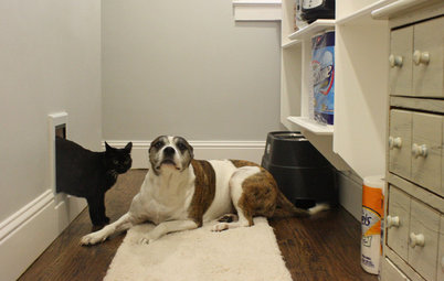 Pet-Proofing Your Home: A Room-by-Room Guide
