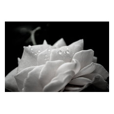 "Delicate Rose Black & White Nature Photo Floral Unframed Wall Art Print, 16""x20"""