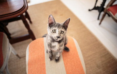Purrfect Pet: How to Choose a Rescue Cat