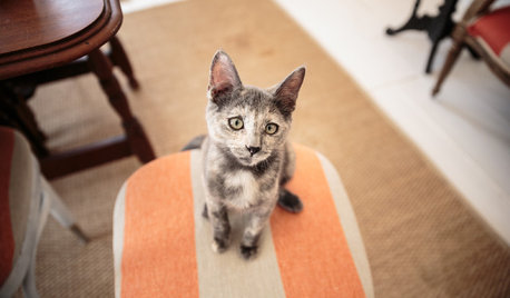 How to Find a Rescue Cat That's a Good Fit for Your Household